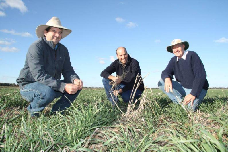 Grow a Summer Cover Crop to Improve Fallow Rainfall Capture